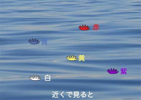 海の散骨-花の色
