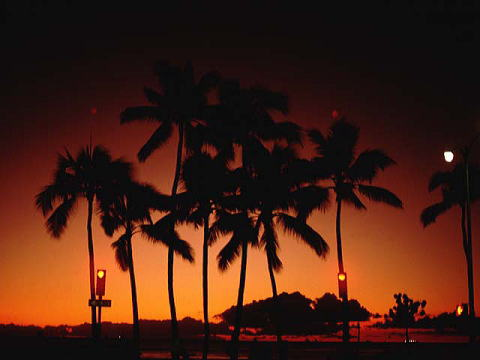 ハワイに行く