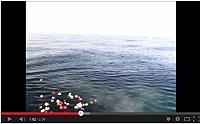 海の散骨風景