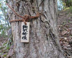 森の散骨-コナラ1