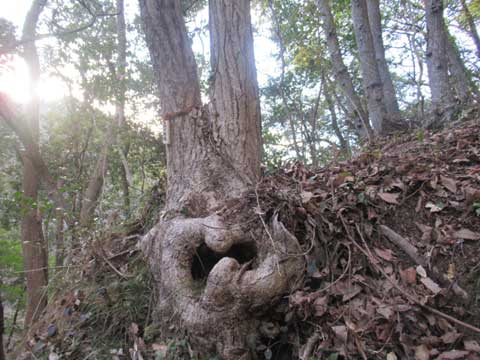 やすらかの森散骨-コナラ3