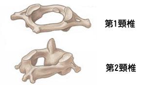 第1頸椎と第2頸椎