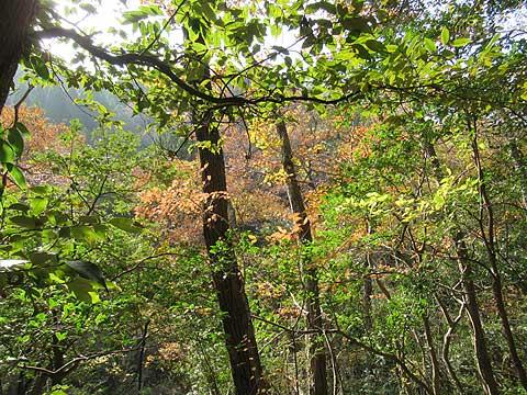 自分の所有する山林