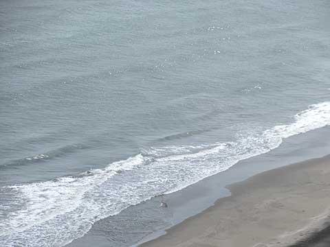 海の散骨が選ばれる理由